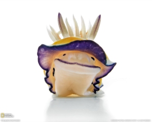 toxic-nudibranch-1162744-080109-xl